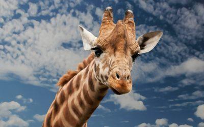 Delicados amaneceres con esencia de azafrán: Safari en África